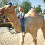wielbłąd w parku zabaw