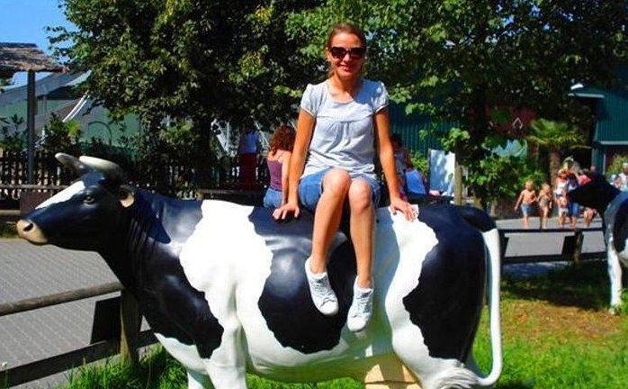 figura krowy outdoor