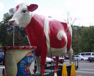relamowa krowa